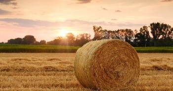 straw-bales-3521063_1920
