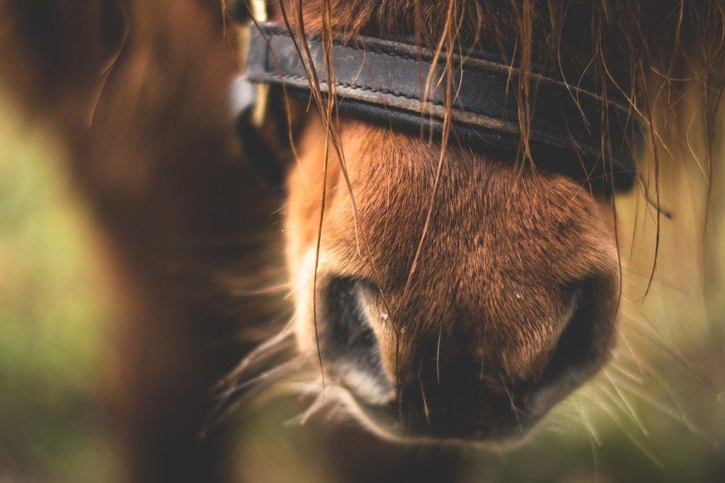 horse-1938331_1280