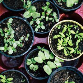garden-plants-gardening-soil-2847908