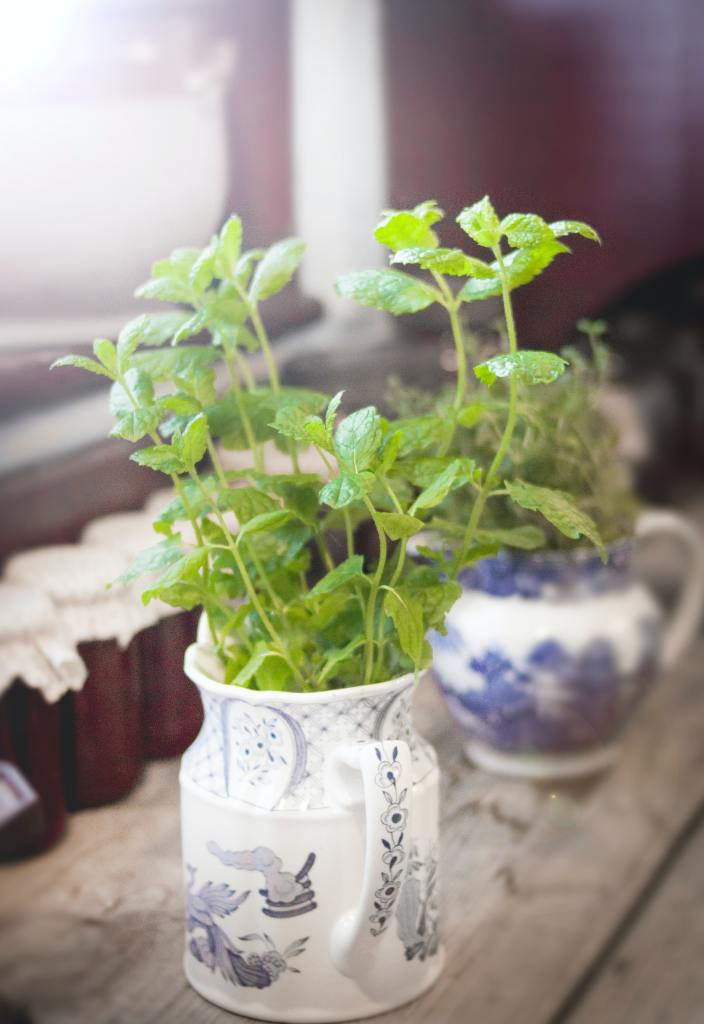 green-leaf-plant-977903