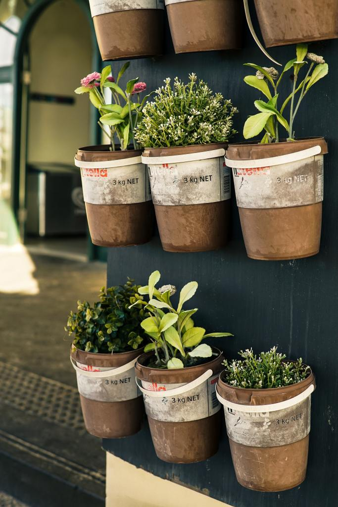 six-potted-plants-close-up-photo-1660533